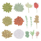 Succulents set. Collection decorative floral design elements for wedding invitations and birthday cards. Stock Image
