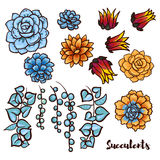 Succulents set  In the hand drawn style. Royalty Free Stock Photo