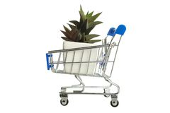Succulents in supermarket trolly stock image