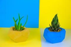 succulents sur un bleu vibrant et un fond jaune photo stock