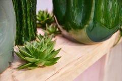 Succulents sur une étagère en bois à côté d'un vase vert - vue de côté photo stock