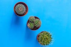 Succulents in Töpfe, gegen blauen Hintergrund, Draufsicht Stockfotografie