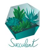 Succulents In A Terrarium succulents in pots, isolated on white background stock illustration