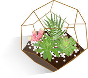 Succulents terrarium. Variety of succulents in glass pentagon terrarium Royalty Free Stock Photos