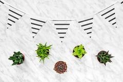 Succulents und abgestreifte Wimpel auf Marmorhintergrund Lizenzfreie Stockfotografie