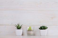Succulents und Kaktus in den Töpfen an über weißem hölzernem Hintergrund Hauptinnenausstattung Skandinavier oder Shabby-Chic-Stil Stockfotografie