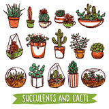 Succulents-und Kaktus-Farbskizzen-Satz Stockfotos