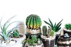 Succulents und Kaktus Innen Stockbild