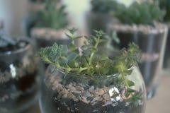 Succulents und Kaktus Innen Lizenzfreie Stockfotos