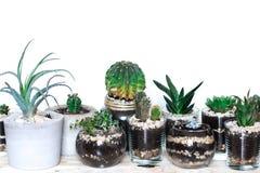 Succulents und Kaktus Innen Stockfotos