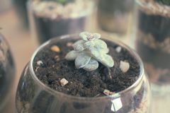 Succulents und Kaktus Innen Lizenzfreie Stockbilder