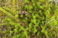 Succulents unter dem Dünen-Gras Lizenzfreies Stockbild