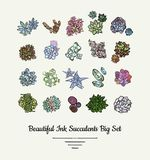 Succulents vector isolated hand drawn illustration set. Modern ink succulent plants logo, icons, poster, banner, postcard. vector illustration