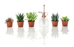 Succulents and vintage style plant mister with reflections royalty free stock photo