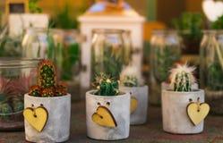 Succulents y cactus agradables, pequeños en diversos potes concretos Imagen de archivo
