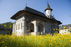 Sucevita monastery. With buttercup flowers Royalty Free Stock Images
