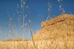 suchą trawę żółty Obraz Royalty Free