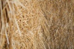 suchą trawę żółty Fotografia Stock