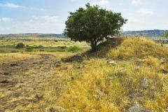 suchą trawę żółty Obraz Stock