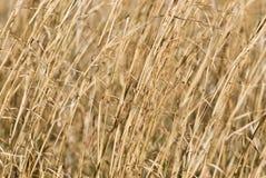 suchą trawę zmiany tło Zdjęcia Royalty Free