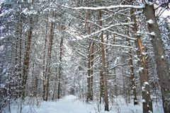 Such a winter landscape as if invites you for a walk, you only need to leave the house royalty free stock photos