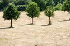 Sucha łąka Zdjęcie Royalty Free