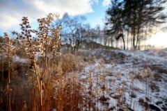 Sucha łąkowa ruta Fotografia Royalty Free