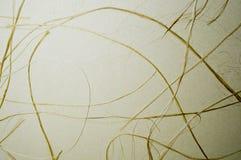 Sucha żółta trawa na beżowym papyru obrazy royalty free