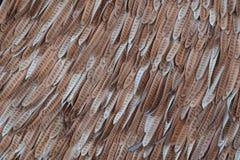 Sucha akaci ziarna tekstura obraz stock