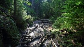 Sucha Bela gorge in Slovensky raj National park , Slovakia Royalty Free Stock Image