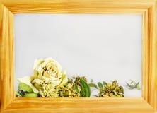 sucha biel róża wśrodku drewnianej ramy zdjęcie stock