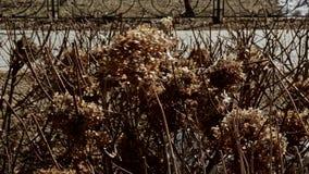 Sucha brąz gałąź w jesień parka chodzeniu wiatrem zdjęcie wideo