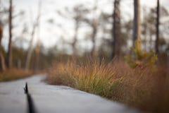 Sucha brown trawa w jesień lasu zbliżeniu Zdjęcie Stock