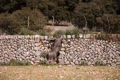 sucha ściana pestkowe Zdjęcie Royalty Free