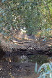 sucha creek Fotografia Royalty Free