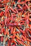 Sucha czerwona chili tekstura Obraz Royalty Free