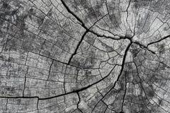 Sucha drewniana sedno powierzchnia Zdjęcie Royalty Free