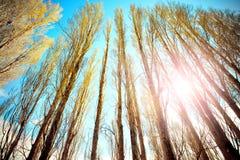 Sucha gałąź w zima sezonie południowej wyspy Zealand nowa aga Obraz Royalty Free