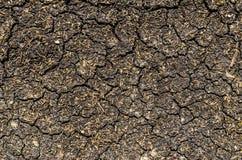 Sucha i krakingowa ziemia z traw ziarnami - tekstura, tło Zdjęcia Stock