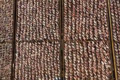 Sucha kałamarnica Zdjęcie Stock