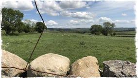 Sucha kamienna ściana Wensleydale Yorkshire obrazy royalty free