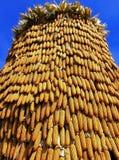 Sucha kukurudza w gospodarstwie rolnym Obraz Stock