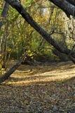 Sucha Lasowa rzeka Zdjęcie Royalty Free