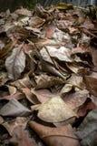 Sucha liść ściółka Zdjęcie Royalty Free