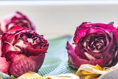 Sucha menchia kwitnie, zaskakuje, r??e, textured t?o, kobiet przyj?cia, i prezenty Herbarium przy pami?ci? fotografia stock