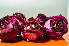 Sucha menchia kwitnie, zaskakuje, r??e, textured t?o, kobiet przyj?cia, i prezenty Herbarium przy pami?ci? zdjęcia stock