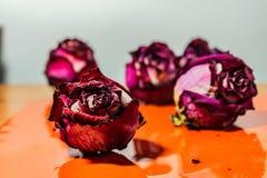 Sucha menchia kwitnie, zaskakuje, r??e, textured t?o, kobiet przyj?cia, i prezenty Herbarium przy pami?ci? zdjęcie royalty free