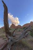 Sucha naturalna drewniana harfa przy łuku parkiem narodowym zdjęcia royalty free