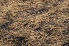 Sucha ostatni rok trawa Zdjęcia Stock