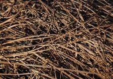 Sucha ostatni rok trawa Obrazy Stock